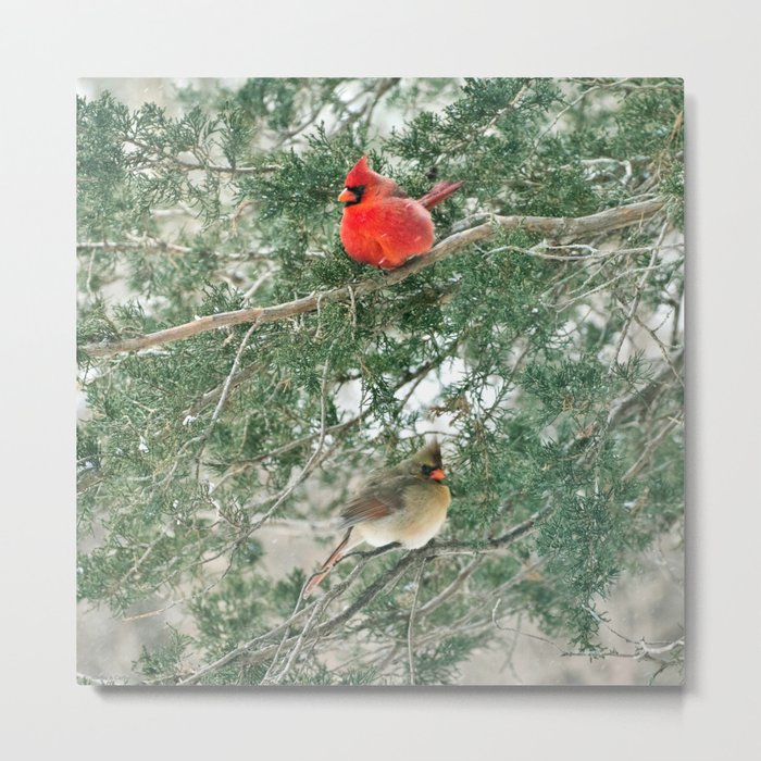 Tree for Two (Northern Cardinals) Metal Print