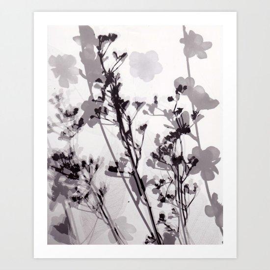Flower Photogram #1 Art Print