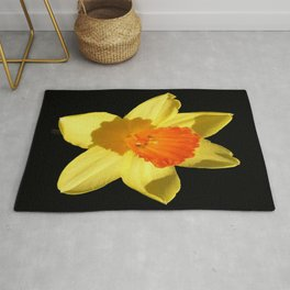 Spring Daffodil Isolated On Black Rug