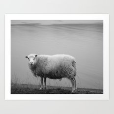 Lost Sheep Art Print