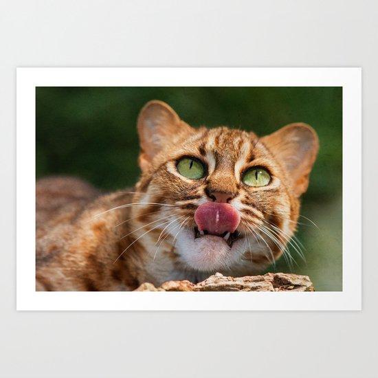 RUSTY SPOTTED CAT LICK Art Print