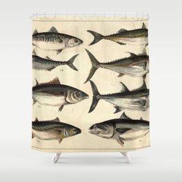 Vintage Illustration of Tunas, Mackerels & Bonitas Shower Curtain
