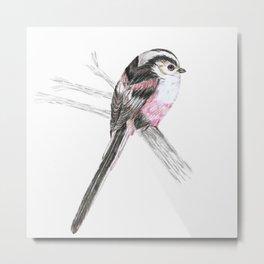 Tailed tit Metal Print