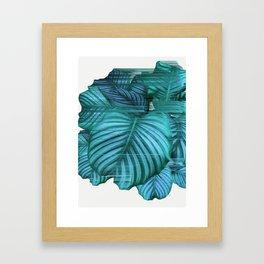 Fast Calathea Framed Art Print