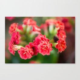 Little Reds Canvas Print