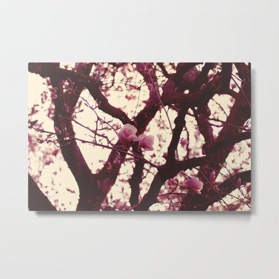 pink magnolias Metal Print