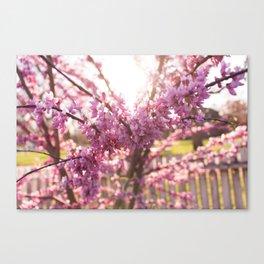 Blossoms Pt. 2 Canvas Print