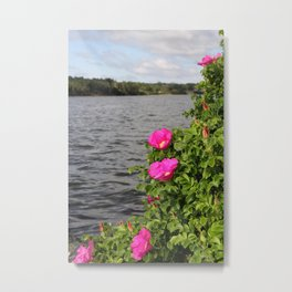 Seaside Wild Roses Metal Print