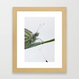Butterfly dandelion Framed Art Print