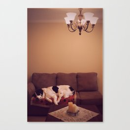 Dog in Luxury Canvas Print