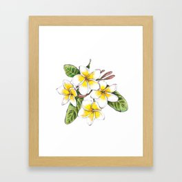 Frangipani Flower Framed Art Print