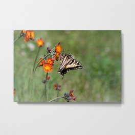 Pasture in Bloom Metal Print