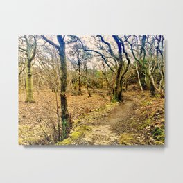 Second path Metal Print