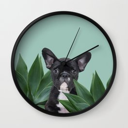 French Bulldog between agave leaves Wall Clock