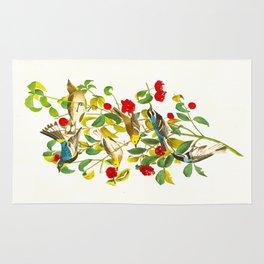 Warbler John James Audubon Scientific Vintage Illustrations Of American Birds Rug