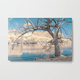Dry Tree Metal Print