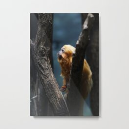 more monkeys Metal Print