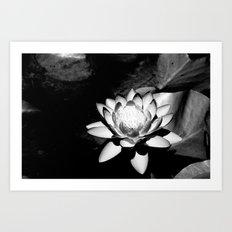 Lotus Flower Art Print