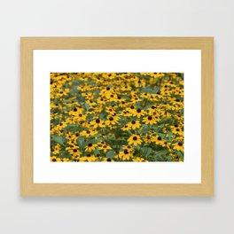 Field of Brown Eyed Susans Framed Art Print