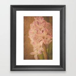 Pretty Pink Hyacinth Framed Art Print