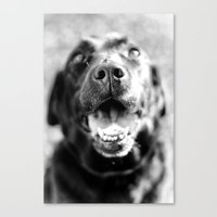 labrador Canvas Prints featuring Labrador by Steph Lauren