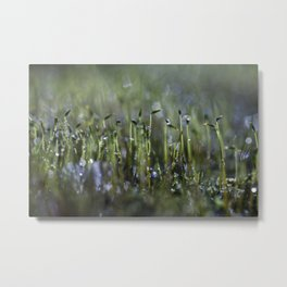 dewy moss sprouts Metal Print