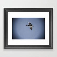 Pelican Spotlight Framed Art Print