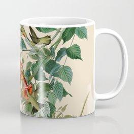 Vintage Hummingbird Illustration - Birds of America Coffee Mug