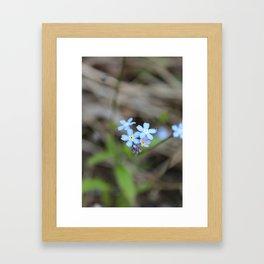Forget-Me-Nots Framed Art Print