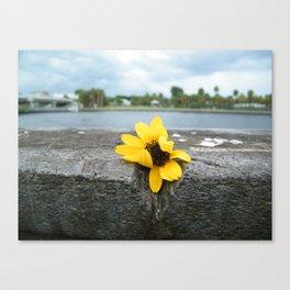 VivianeCPhotography Canvas Print