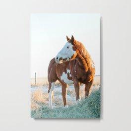 Pferd Metal Print
