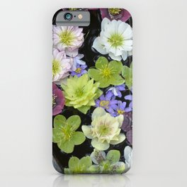 Colorful hellebore flowers iPhone Case