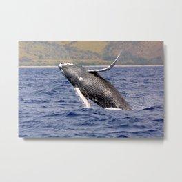Humpback Whale Splashing Metal Print