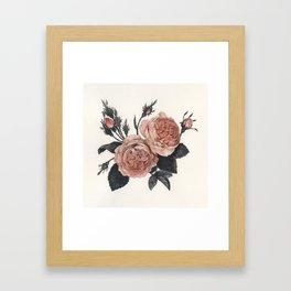 Maura Rose Framed Art Print