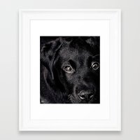 lab Framed Art Prints featuring Black Lab by Jim Pavelle