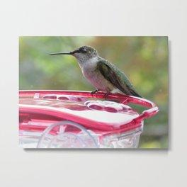 Curious hummingbird 7 Metal Print