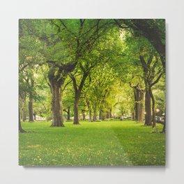 Central Park Summer Metal Print