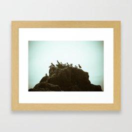 puffins Framed Art Print