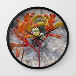Orange Kangaroo Paw Flowers Wall Clock