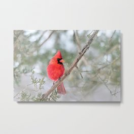 Winter's End Cardinal Metal Print