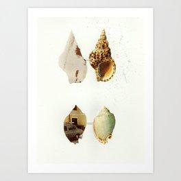 Shells Art Print