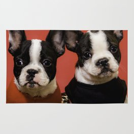 Adorable Black and White French Bulldog Puppies Dressed up for Christmas Rug