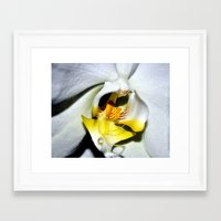 orchid Framed Art Prints featuring orchid by  Agostino Lo Coco