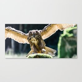 Eagle-owl landing on a stump Canvas Print