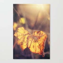 That Glow of Gold Canvas Print