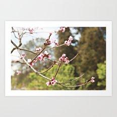 Spring Has Arrived Art Print