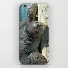 Turtle Ashore iPhone & iPod Skin
