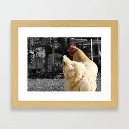Another Dramatic Chicken Framed Art Print