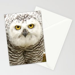 Laying down the law Stationery Cards