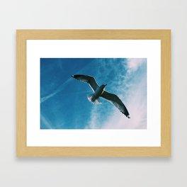 It's a Bird! It's a Plane! No, It's a Bird! Framed Art Print